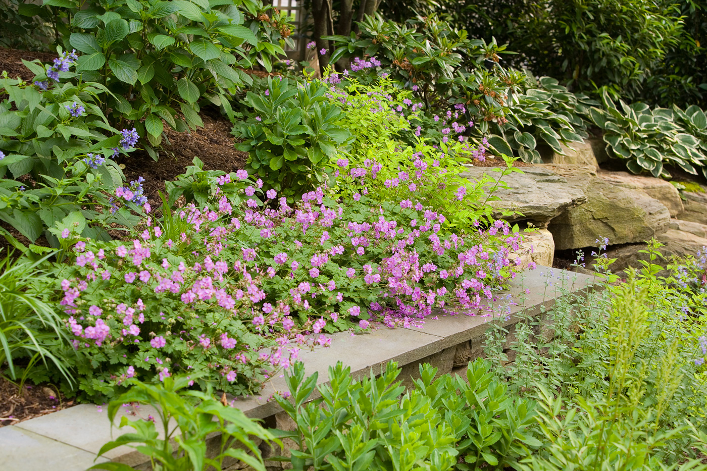 Landscape design perennial garden tips for growing a for Perennial garden design