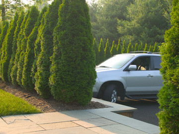 Screening and Privacy Landscaping by Cording Landscape Design