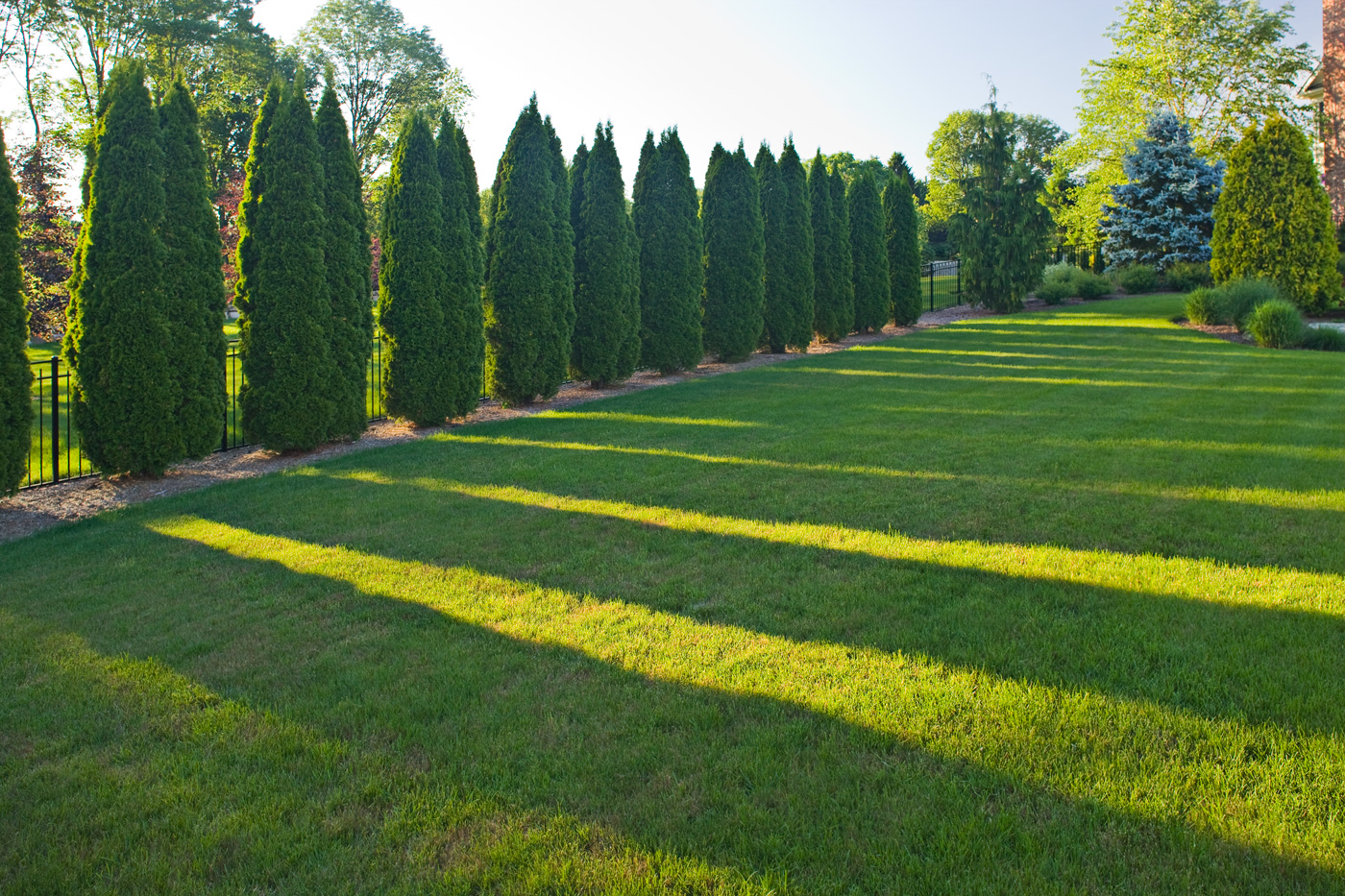 Screening and privacy cording landscape design for Landscape trees