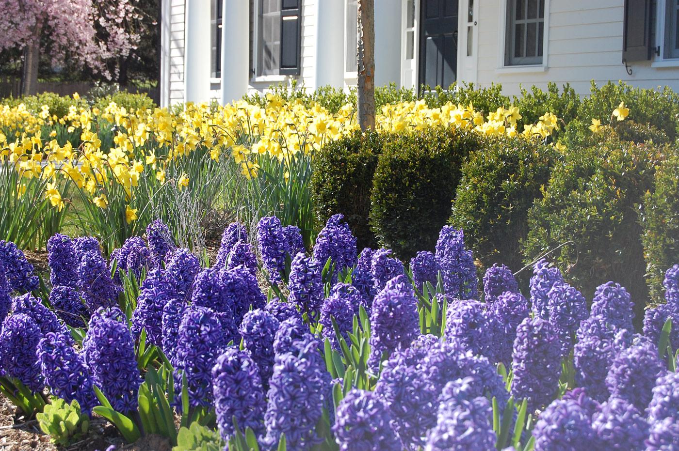 Seasonal Garden by Cording Landscape Design